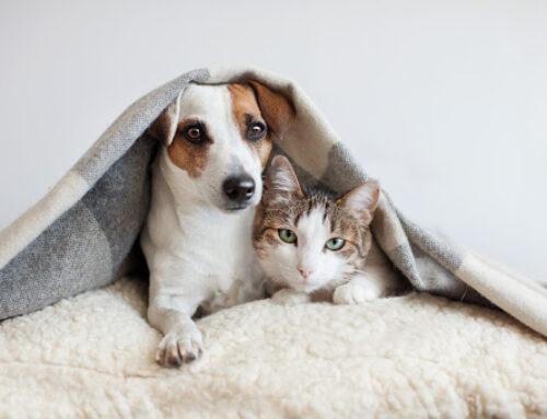 Pets podem ajudar a combater solidão na quarentena
